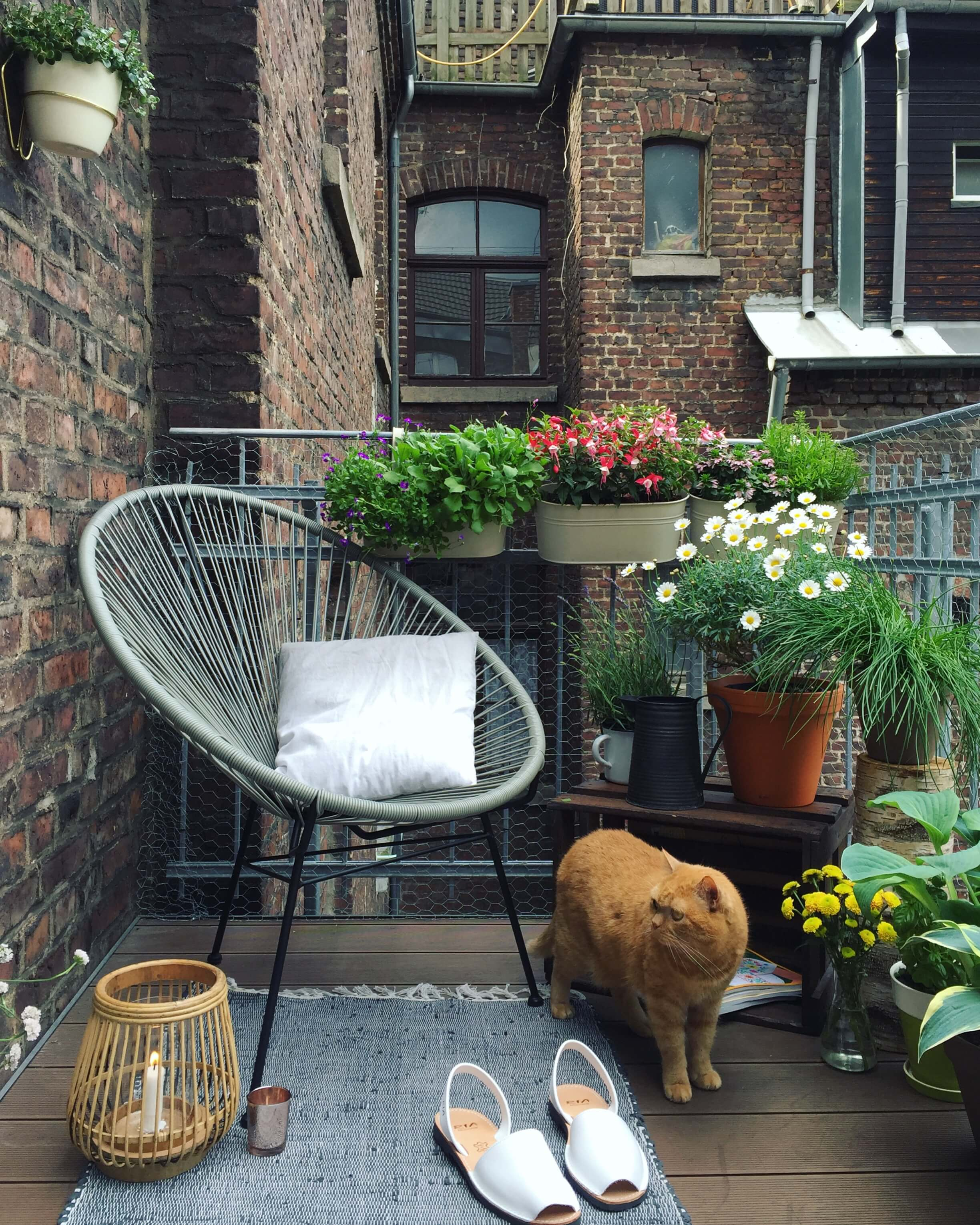 Apartment Patio Ideas On A Budget Plants